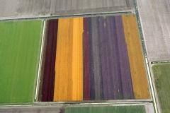 Julianadorp Bollenveld bloeiend Zijpe 2000 lfh 000812050-131
