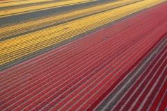 Flevo polder bollenvelden 2001 lfh 010508048-053