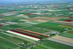 Het Zand Bloemenbollen velden Noordholland 2001 lfh 010513031-109