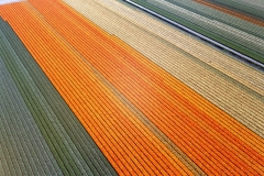Breezand Bollenvelden Hollandse bloemen tuin 2004 lfh 040427006-044