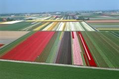 Breezand Bollenvelden Hollandse bloemen tuin 2004 lfh 040427010-45