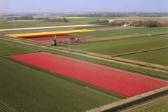 Breezand Bollenvelden Hollandse bloemen tuin met molen 2004 lfh 040427022-047